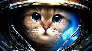 Disclaimer: There are no Space Marine Kitties in Starcraft II.