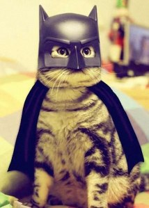 batman-cat
